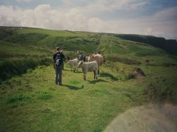 Mont Saint Michel, Normandia